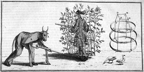 Newspaper clipping in which there are three figures. On the right a man, hunched over with a shotgun is cloaked beneath the costume of a bull. In the center a man wearing a tricornered hat, wig, and long overcoat is carrying a shotgun. He is enmeshed within a framework to which flora is used to hide his presence. On the far right is a detailed depiction of framework that hides the man.