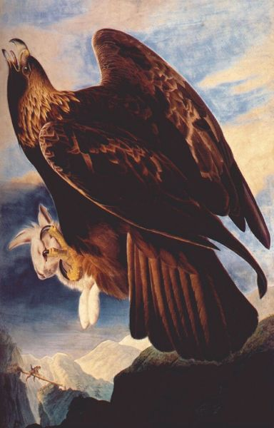 Painting of a golden eagle with a rabbit in its talons.