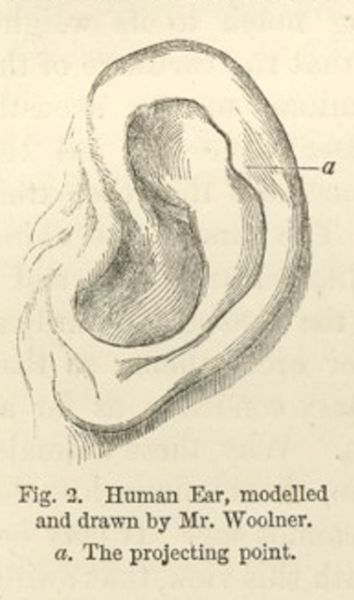 Pencil drawing of a human ear, with a line calling attention to the projecting point on the inside edge of the ear toward the back of the head.